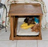Röd ek som göras hunden att bo i en hundkoja för liten hundkapplöpning Fotografering för Bildbyråer