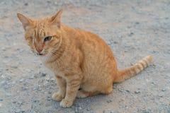Röd enögd katt på gatan arkivbild