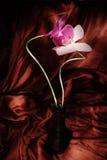 röd enkel white för orchids Royaltyfria Foton