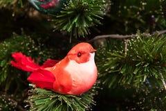 Röd fågel arkivbilder