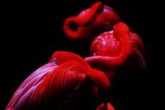 Röd fågel Royaltyfria Bilder