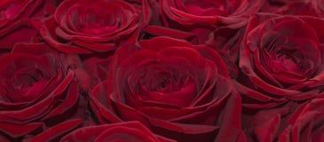 Röd förälskelse Royaltyfria Bilder