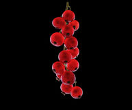 Röd för närbild smaklig och mogen vinbär Ny och ljus röd vinbär på en svart bakgrund Röda mogna vinbär på en mörk bakgrund Royaltyfria Foton