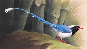 Röd-fakturerad blå skata (den Urocissa erythrorhynchaen) på en mossig inloggning en bambuskog Royaltyfria Foton