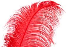 Röd fjäder Fotografering för Bildbyråer