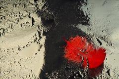 Röd fjäder om en droppe av vatten Arkivbilder