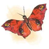 röd fjäril Royaltyfri Fotografi