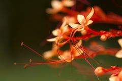 Röd flora Royaltyfria Foton