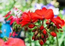 Röd flora Arkivbild
