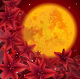 Röd flower02 Arkivbilder
