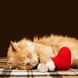 Röd fluffig katt som kramar sovande den mjuka flotta hjärtaleksaken Royaltyfri Fotografi