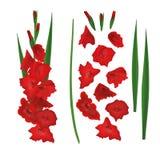 Röd gladioluskonstruktör, skapare för blommor för svärdlilja Stam blommor, knoppar, sidor också vektor för coreldrawillustration stock illustrationer