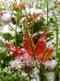 Röd gräsplan och vit Arkivfoto