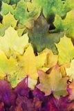 Röd grön orange guling Autumn Leaves Background Royaltyfria Bilder