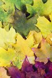 Röd grön orange guling Autumn Leaves Background Fotografering för Bildbyråer