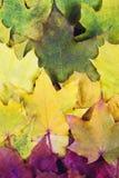 Röd grön orange guling Autumn Leaves Background Arkivbilder