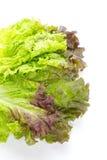 Röd grönsallat royaltyfri foto