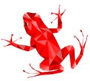 Röd groda royaltyfria bilder