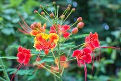 Röd gul blomma för bästa sikt royaltyfria bilder