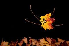 Röd-guling bladnedgångar Royaltyfri Bild