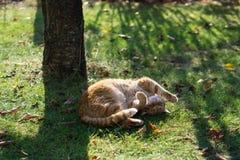 Röd-guling katt i gräs arkivbild