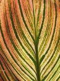 Röd guling- och gräsplanbladbakgrund Arkivfoto