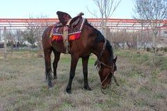 Röd häst Royaltyfri Fotografi