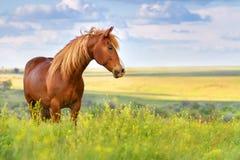 Röd häst i blommor arkivbild