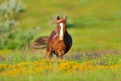 Röd häst i blommor royaltyfria bilder