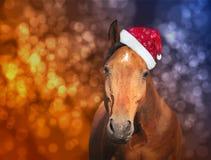 Röd häst i jultomtenhatt på julbakgrund med bokeh royaltyfria bilder
