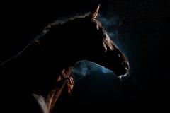 Röd häst i natten under regnet och röken Arkivbilder