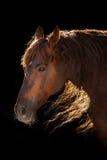 Röd häststående i solljus Royaltyfria Foton