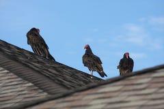 Röd-hånglade gam på ett tak Arkivbild