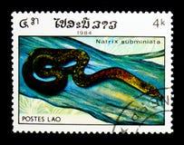 Röd-hånglade Keelback (den Rhabdophis subminiatusen), reptilserie, ci royaltyfria bilder