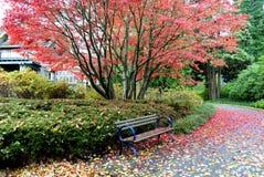 Röd hösttree i parken Royaltyfria Bilder
