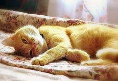 Röd-hövdad katt Royaltyfri Bild