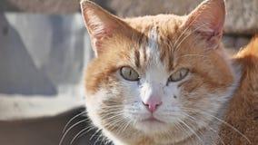 Röd hemlös stor stående för katt han problemet av hemlöns daltar hemlös det fria katten arkivfilmer