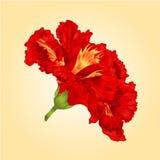 Röd hibiskusvektor för tropiska blommor Royaltyfri Fotografi