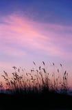 Röd himmel för afton Arkivfoto