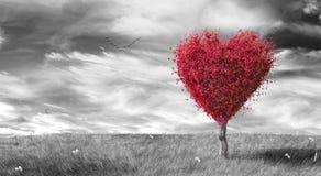 Röd hjärta formade trädet på svart, & vit landskap bakgrund Royaltyfria Bilder