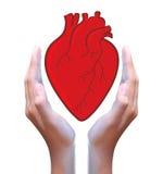 Röd hjärta i hand Arkivfoto