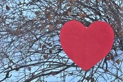 Röd hjärta i vinter på ett träd med vit bakgrund royaltyfri foto