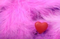 Röd hjärta på fjädrar Royaltyfri Foto