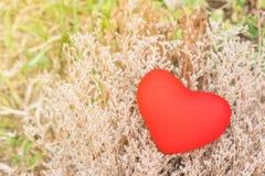 Röd hjärta på gräs blommar i trädgården royaltyfria bilder