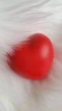 Röd hjärta på vit pälsbakgrund Royaltyfria Bilder