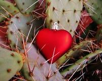 Röd hjärta som fångas på de skarpa taggarna av en kaktus arkivfoto