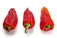 Röd hopskrumpen peppar på en naturlig vit bakgrund fotografering för bildbyråer
