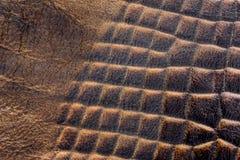 röd hudyellow för krokodil Arkivbilder