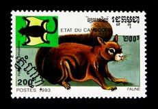 Röd jätte- petaurista för Petaurista för flygekorre, djurserie, circa 1993 Arkivbilder