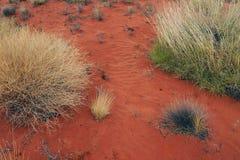 Röd jord och inföding Spinifex, Uluru Royaltyfri Fotografi